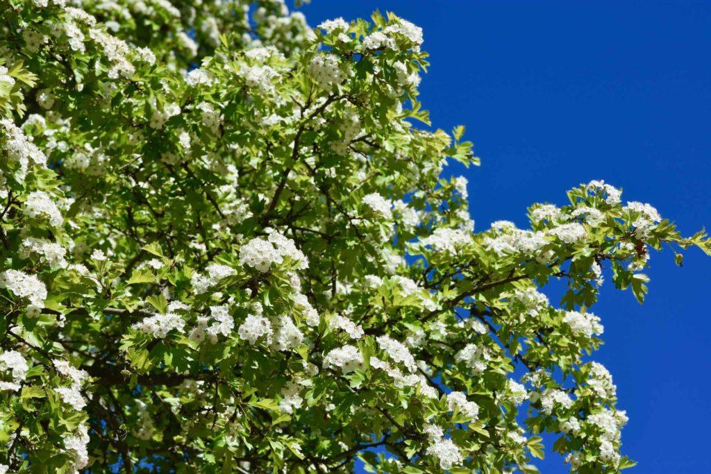 Pleine nature sur la Voie Verte