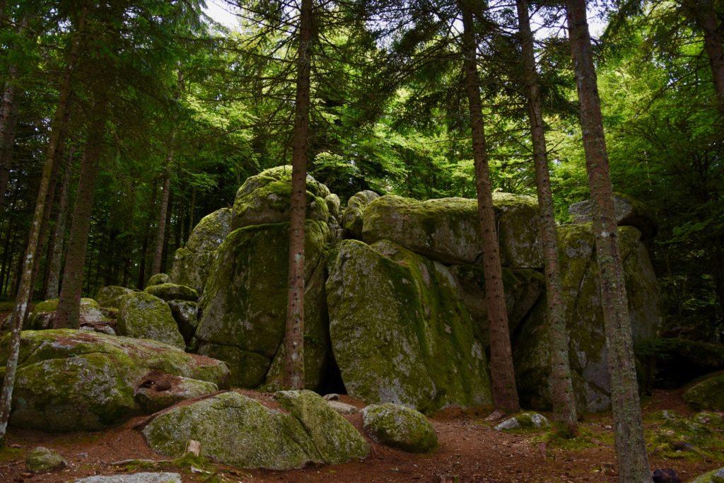 Le Ron de la Baoune dans la forêt de Mercoire